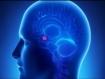 El aumento de los niveles de transportadores de serotonina en la amígdala ayuda a explicar la propensión a la ansiedad (J Neurosci)