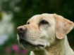 Study shows UK sniffer dogs have a nose for prostate cancer