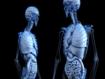 Descubrimiento de nuevas glándulas