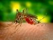 Cambio climático y enfermedades transmitidas por mosquitos. ¿Están cambiando los patrones de transmisión en el Sur de Europa y África?